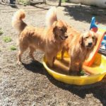 cooper & bogart pool play yard