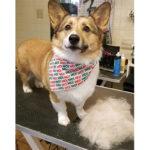 grooming-7